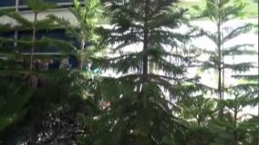 نمایشگاه گل تهران.