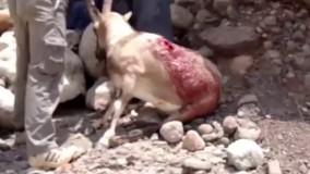 کشتار وحشیانه و انقراض گوزن ایرانی