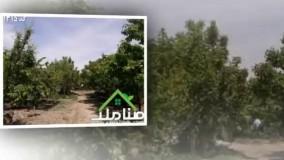 فروش 13000متر باغ با بنای قدیمی در ملارد کد1315