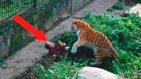 حوادث وحشتناک در  باغ وحش ها