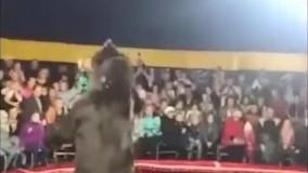 حمله غافلگیرانه خرس به مربی سیرک
