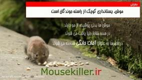 راه های ورود موش به خانه