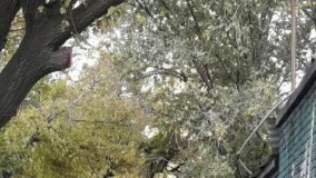 کلیپ دکلمه تصویری غزل عاشقانه غمگین فارسی با شعر و صدای معین تبریزی