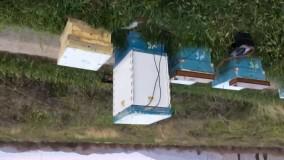 جعبه ی جدید زهرگیری با 3 قاب همزمان در یک کندو مهندس فرشید زارع