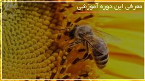 آموزش زنبورداری بصورت کامل در 118 فایل
