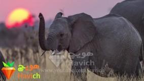 عجیب ترین ها-18 حقیقت بسیار جالب در مورد فیل ها که شاید نمیدانستید