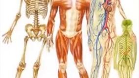 دانستنی های عجیب-حقایق شگفت انگیز و عجایب بدن انسان