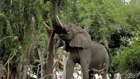 حقایق جالب جدید-حیوانات رکوردشکن جهان