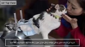 دانستنی های عجیب- 11 حیوان با اندام مصنوعی