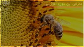 آموزش کامل زنبورداری - www.118file.com