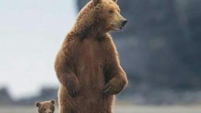 مرگ توله خرس در سوادکوه