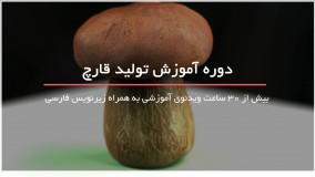 تولید قارچ در خانه
