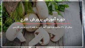 آموزش پرورش قارچ بابخار