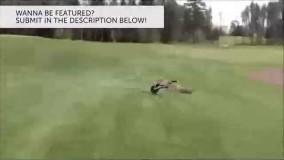 جدید - گلچین شده : شکار لحطه های فوق العاده خنده دار و دیدنی