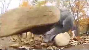 جدید - ویدیو های جدید - خنده دار ترین کلیپ دنیا- کوتاه
