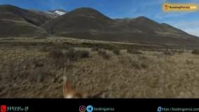 پارک ملی لس گلاسیرز آرژانتین آخرین پناهگاه حیوانات نادر - بوکینگ پرشیا bookingpersia