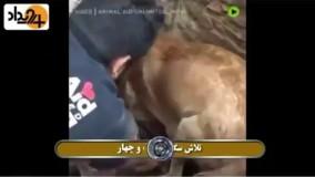 تلاش سگ ماده برای نجات توله هایش