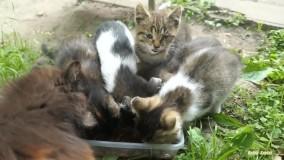 این زندگی بچه گربه ها در خیابان است
