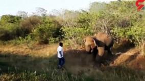 فراری دادن فیل با دست خالی توسط یک مرد