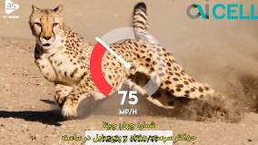 حیات وحش ؛ سریع ترین حیوانات دنیا
