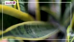 مقاوم ترین گیاه آپارتمانی چیست ؟ معرفی 5 گیاه مقاوم و کم هزینه