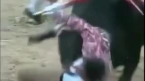حمله گاو وحشی عصبانی به گاوباز