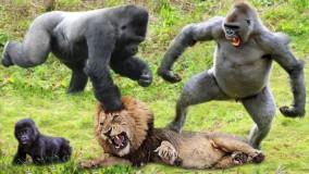 حیات وحش ؛  10 برترین شکارچی در حیات وحش