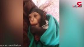 راز کشته شدن مادر «باران» در تهران فاش شد