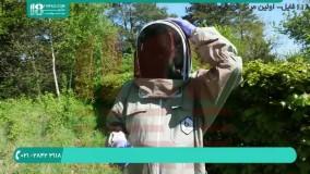 زنبورداری | پرورش زنبور | تولید عسل طبیعی
