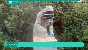 پرورش زنبور عسل | بچه دادن یا تقسیم کلنی در زنبور عسل