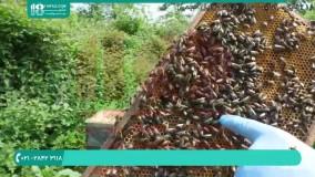 اجزاء تشکیل دهنده کلنی زنبورعسل | زنبورداری