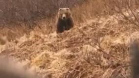 مستند حیات وحش : شکار خرس با تیر و کمان