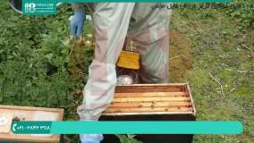 سونا برای زنبور عسل ( مرگ برای واروآ )
