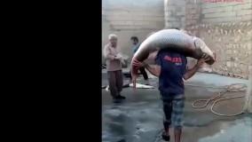صید بزرگترین ماهی در ایران در سیمره