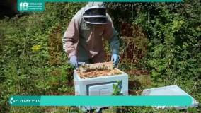 محل استقرار مناسب برای کلنی زنبور عسل در فصل زمستان