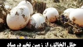 بیرون آمدن تخم از زیر زمین