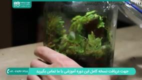 آموزش نحوه نگهداری از گیاهان آکواریومی در داخل تراریوم