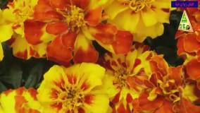 انواع گل گروه کشاورزی زانکو
