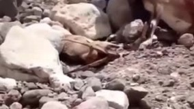 حیوان آزاری و حیوان کشتن به قیمت چند عکس و فیلم