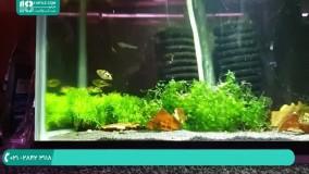 نحوه نگهداری از ماهی تارگت پوفر در آکواریوم گیاهی