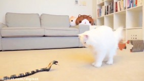 کلیپ گربه های کیوت ؛  واکنش گربه ها به مار عروسکی