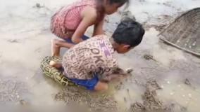 تلاش دو کودک خردسال برای گرفتن مار پیتون