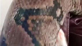 نگهداری از بزرگترین مار پیتون جهان به عنوان حیوان خانگی
