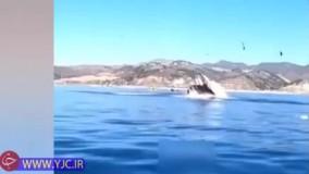 لحظه بلعیده شدن یک دختر جوان توسط نهنگ گرسنه