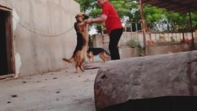 بازی با سگ ژرمن