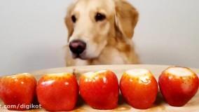 چالش غذا خوری سگ اسمر