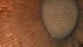 تصویری از برخورد سیارک به سطح مریخ