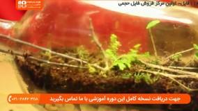 گیاهان مناسب برای ساخت تراریوم ( باغ شیشه ای )