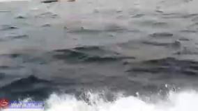 فیلمی از کشتی غرق شده در جزیره لارک هرمزگان