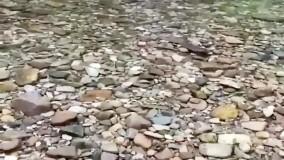 کلیپ موزیکال آواز گنجشک با تم رودخانه برای استوری و پروفایل